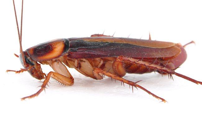Насекомых.нет. рф. Купить средство от тараканов.